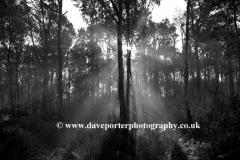 Autunm Woodland, Sherwood Forest