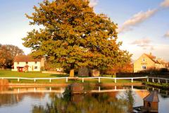 Autumn, Barrowden village pond