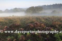 Misty sunrise; Broomy Plain, New Forest