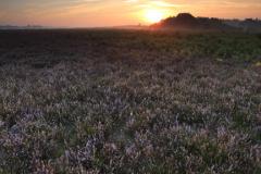 Misty sunrise; Ocknell Plain, New Forest