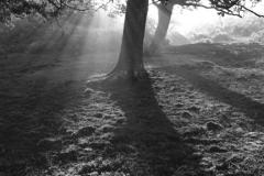 Misty sunrise;  White Moor, New Forest