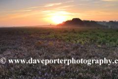 Misty morning sunrise; Ocknell Plain, New Forest
