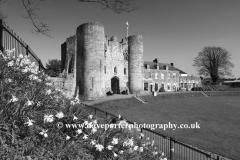 Spring Daffodil flowers on the green of Tonbridge Castle, Tonbridge town, Kent, England, UK