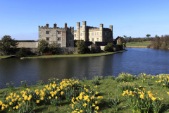 Spring Daffodils and lake, Leeds Castle