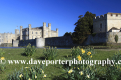 Spring Daffodils at Leeds Castle