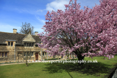 Spring, Cherry Trees, the Almshouses, Stamford