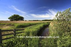 Summer view over Hickling Broad NNR, Norfolk Broads National Park, England, UK