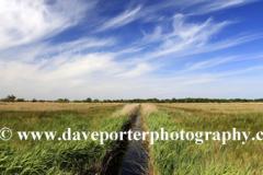 Summer,  Hickling Broad, Norfolk Broads, Broads views, Norfolk, England, UK