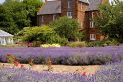 J02038 Norfolk Lavender centre Heacham North Norfolk England Britain UK,