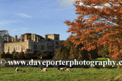 Autumn, September, October, Autumn Beech Tree, Deene Hall, Northamptonshire, England, UK