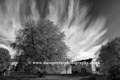 Autumn, November, October, Chestnut Tree, Duddington village, Northamptonshire, England, Britain, UK