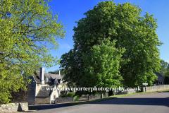 Spring Chestnut Tree, Duddington village, Northamptonshire, England, UK