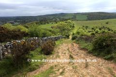 Summer, Wavering Down, Somerset Levels, Mendip Hills, Somerset County, England, UK
