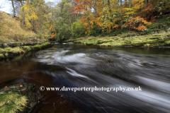 Autumn, River Ribble, Yorkshire Dales