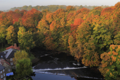 Autumn colours; River Nidd, Knaresborough town