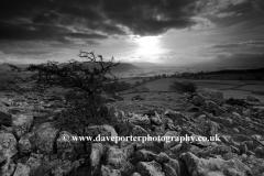 Norber Dale near Austwick village, Yorkshire Dales
