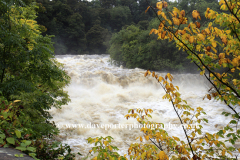 Flooded River Ure; Aysgarth Falls; Wensleydale