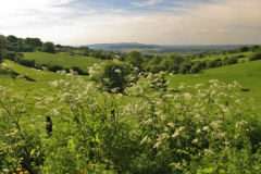 Summer view over Cotswolds fields