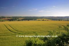 countryside Scene near Shipton under Wychwood, Oxfordshire Cotswolds, England, UK