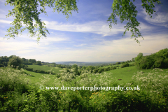 Countryside Scene near Shipton under Wychwood