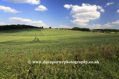 Summer landscape fields near Winchcombe town