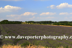 Summer Lavender fields near Snowshill village