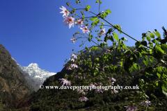 Snow, Kusum Khangkaru mountain, Himalayas, Nepal