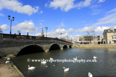 Summer view of swans on the river Great Ouse, Bedford town