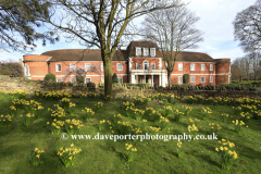 Spring Daffs, the Almshouses, Bedford town, Bedfordshire, England, UK
