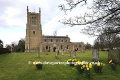 Spring Daffs, St Andrews church, Great Staughton