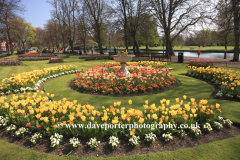 Spring, April, May, Tulip flower gardens, river Great Ouse, Bedford town, Bedfordshire, England, Uk