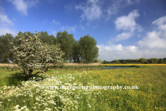 Spring view, river Great Ouse , Bromham village