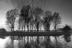 Trees along the river Nene, Castor village