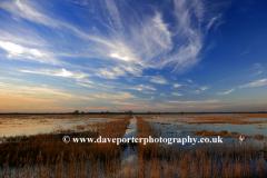 Swans, Welney Washes Nature reserve