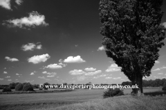 Buttercup fields, river Nene valley, near Castor village