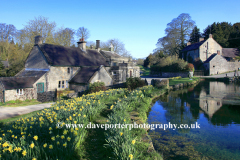 Daffodils by the village green and pond, Tissington