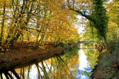 The River Derwent in Autumn Matlock Town