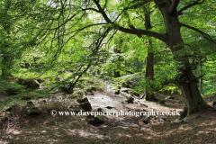 Ancient woodland, river Derwent valley, Padley Gorge