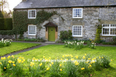Spring Daffodils, cottage in Ashford in Water village