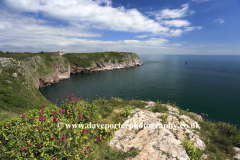 Flowers and cliffs, Berry Head, Nature Reserve, Torbay