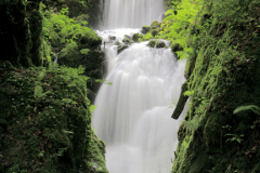 Canonteign Waterfalls near Chudleigh village