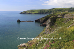 Summer, wildflowers and cliffs at Durl Head, Torbay