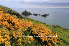 Wildflowers and cliffs, Kellys Cove, Start Bay