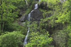 Canonteign Waterfalls, Chudleigh, Dartmoor