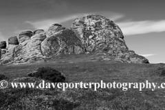 Gorse and Heather, Haytor Rocks, Dartmoor