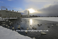 Swans and Geese on the frozen Tjornin lake, Reykjavik