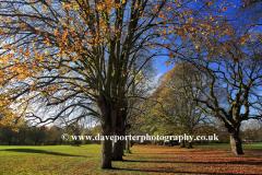 Autumn, October, November, trees with Autumn Colours, Play Close Park, Melton Mowbray town, Leicestershire, England; Britain