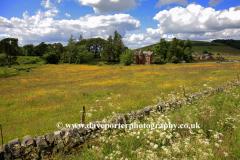 Flower Meadow, Thankerton village, Upper Tweeddale
