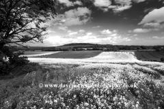 Summer Landscape, Eartham village, South Downs