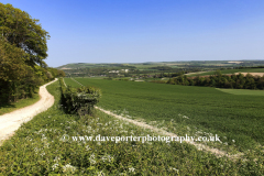 Summertime, South Downs near Amberley town